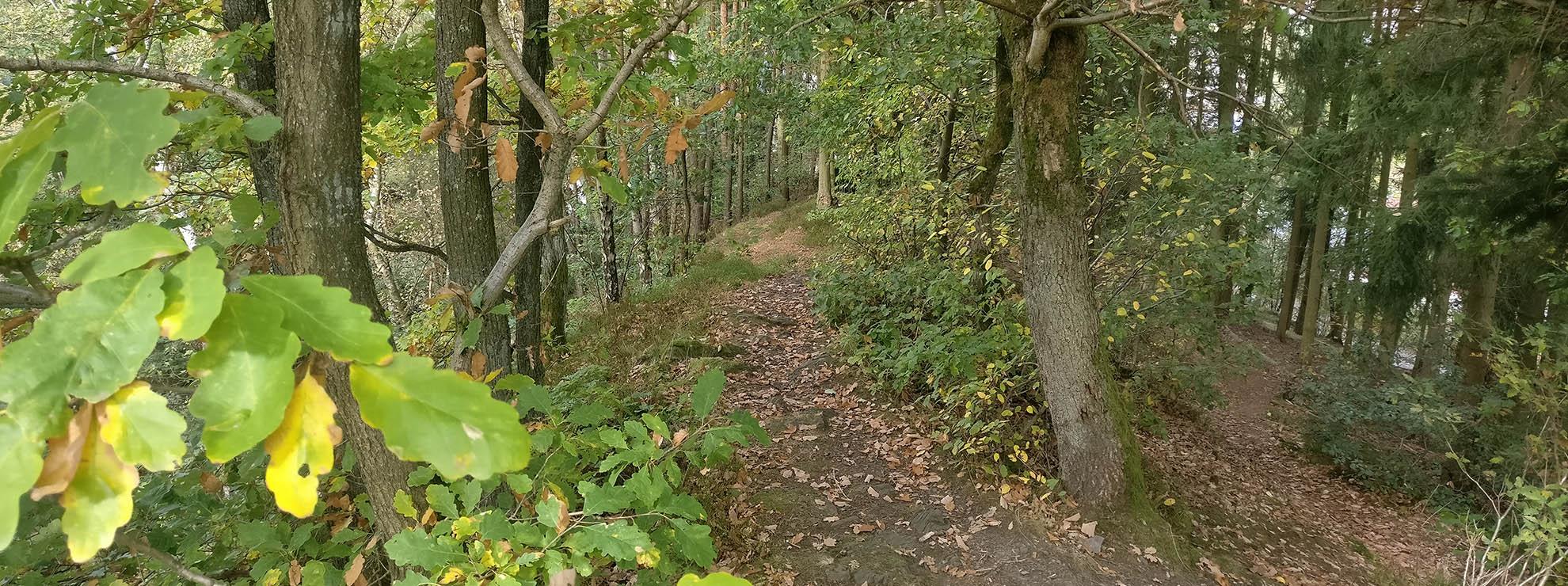 Sauerland Mountain Bike Trails direkt in der Nähe