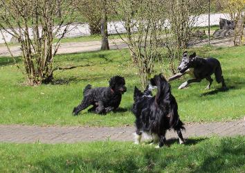 Urlaub mit Hund Sauerland